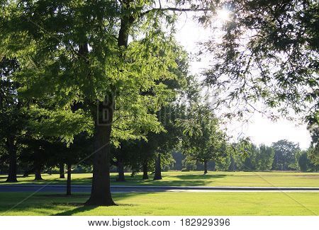 Roadside park with gorgeous sun-filled lawn and trees