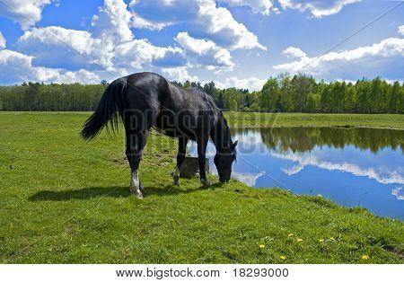 Schönen Frühling Ansicht des Holzes mit einem Pferd-Trinkwasser