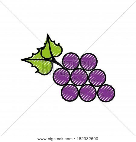 bunch of grapes icon over white background. colorful design. vector illustration