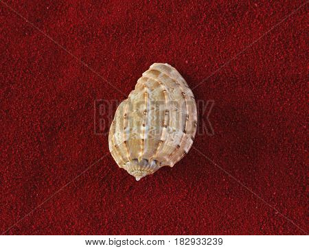 Harpa amouretta common name the lesser harp is a species of sea snail a marine gastropod mollusk