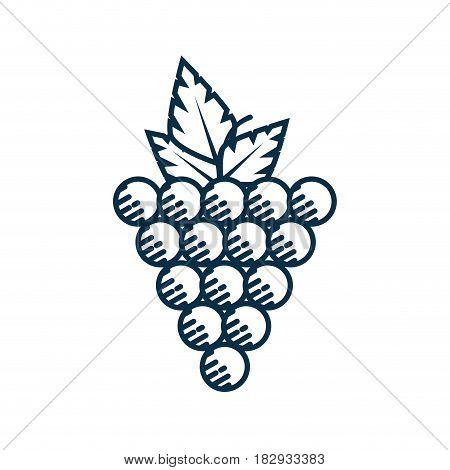 bunch of grapes fruit icon over white background. vector illustration