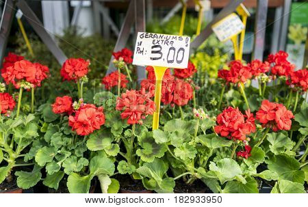Red geraniums in a Paris, France market in Spring, with euro price sign