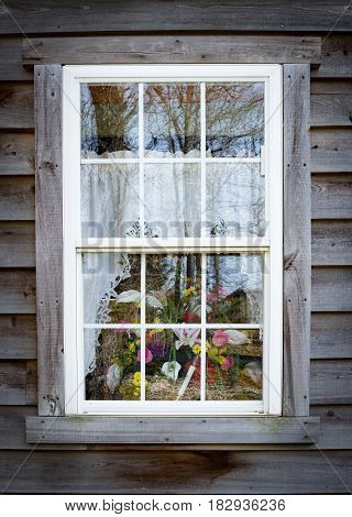 vertical image of an exterior white framed window with lace curtains and beautiful flowers peeking from the window.