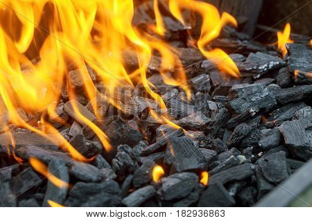 Background Of Flames And Glowing Embers In Campfire
