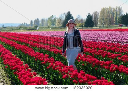 Pretty woman in tulip fields. Skagit Valley Tulip Festival. Mount Vernon. Seattle. WA. United States.