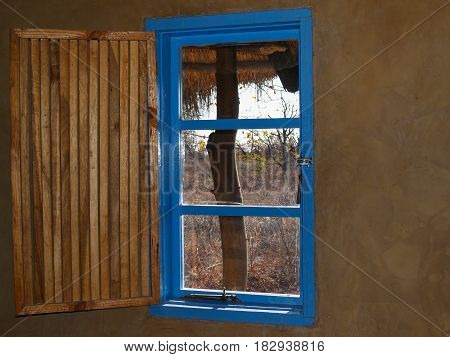 Bright blue window with open slat slat wooeden shutter and view out to African bush.
