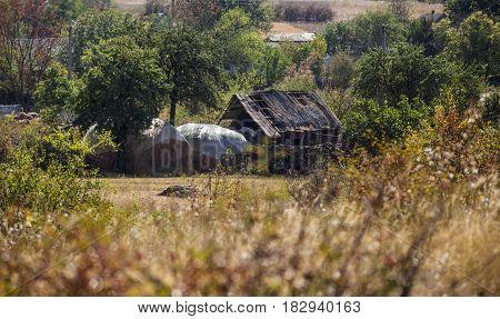 the abandoned barn at the Ukraininan village