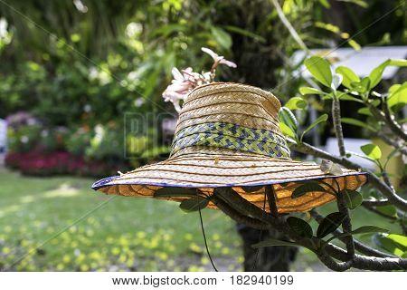 Gardener, Straw Hat On Tree In The Park.