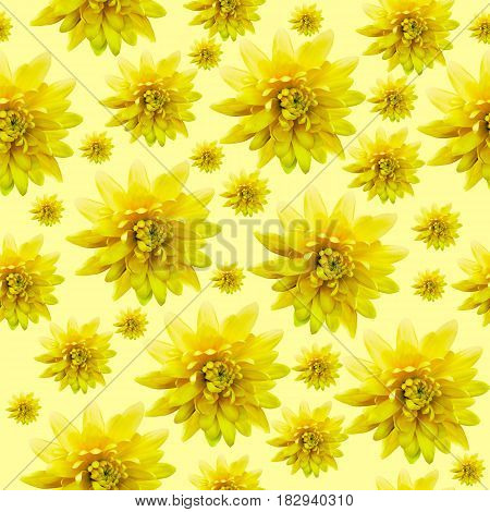 Seamless infinite yellow floral background. For design and printing. Background of natural chrysanthemums.
