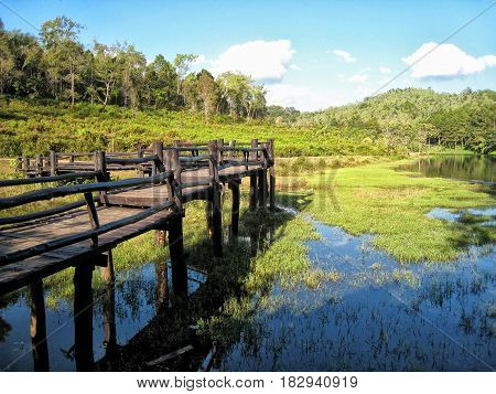 Wooden bridge run into the lake in tropical forest.