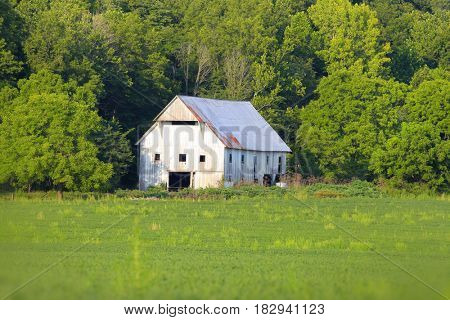 White barn in summer time in rural Indiana