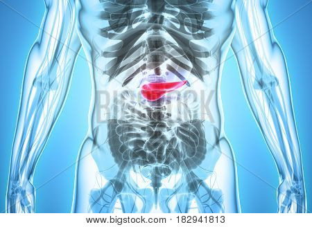 3D Illustration Of Pancreas - Part Of Digestive System.