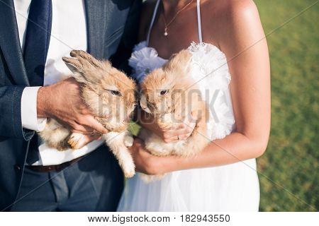 wedding couple are holding two small rabbits, summer time.