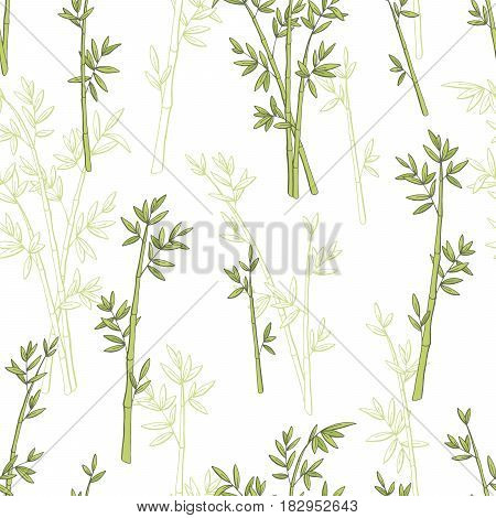 Bamboo plant graphic green color seamless pattern sketch illustration vector