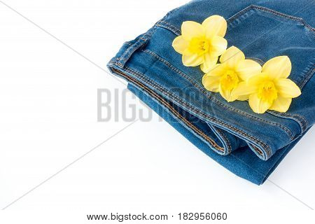 Blue denim jeans with three beautiful narcissus flowers in the pocket with copy space.