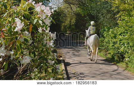 Countryside scene with horse rider in Dorset England