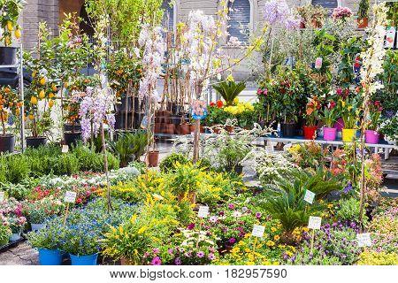 Garden Market On Prato Della Valle In Padua