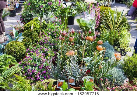 Garden And Flower Market On Prato Della Valle
