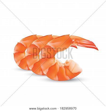 Shrimp Seafood. Shrimp vector illustration isolated on white background