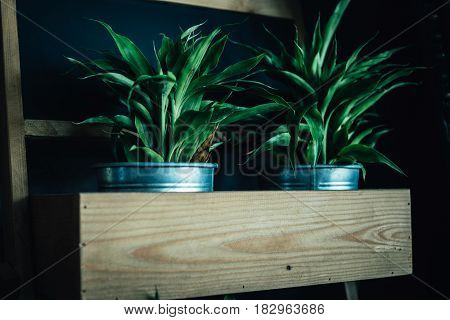 plant for decoration in iron pot on wood plate