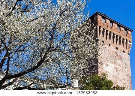 Blossoming Cherry Tree And Torre Di Porta Castello