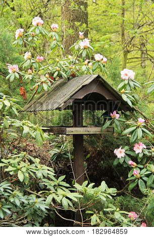 wooden bird feeder in the blooming rhododendron bush