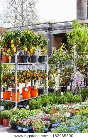 Decorative Trees On Garden Market In Padua