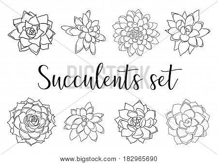 Succulents succulent black linear beautiful collection set setting. Vector cute illustration textile fabric element design