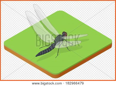dragonfly isometric isolated vector eps Illustration. damselfly insect 3d