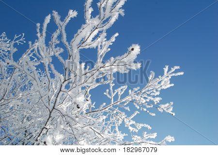 wit besneeuwde tak tegen over felblauwe achtergrond