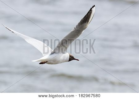 The photograph shows a gull flying above the water