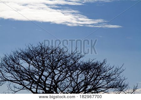 Silhouette leafless tree branches on blue sky with clouds background