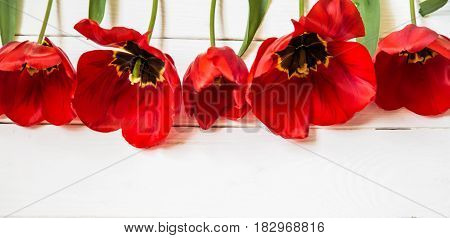 Red Tulips On White Wooden Background, In A Row
