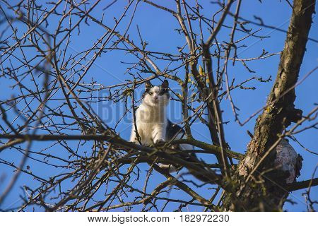 White cat sit on on tree looks for birds