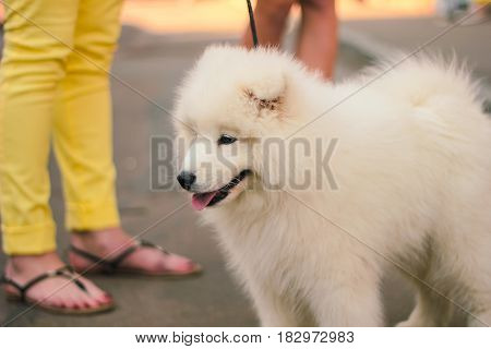 beauty white dog on street makes people happy