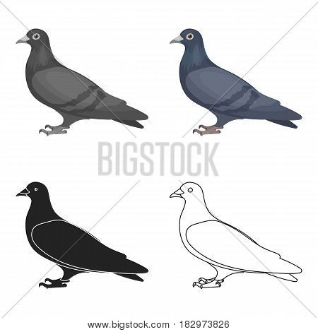Pigeon icon in cartoon style isolated on white background. Bird symbol vector illustration.