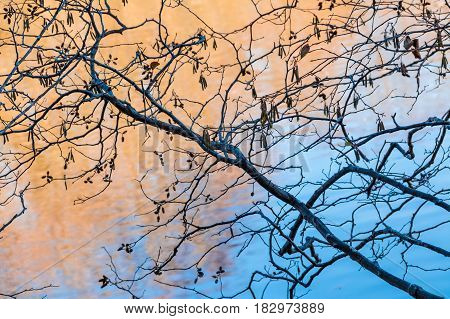 The bare branches of the alder on the background of blue water of lake