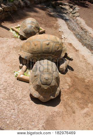 Turtles in Spain Zoo funny looking turtles