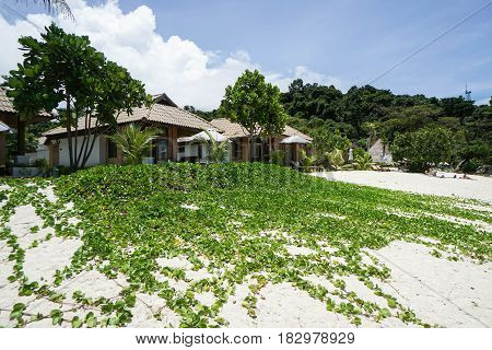 morning glory grow on sand at beach with resort background
