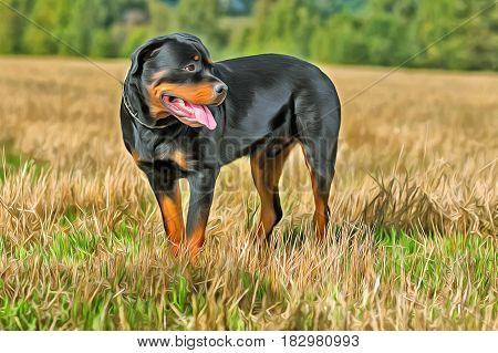 Rottweiler dog portrait at green field colorful painting