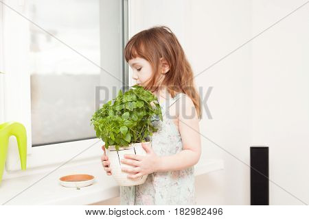 A Girl Looks After A Basil In A Pot On A Windowsill