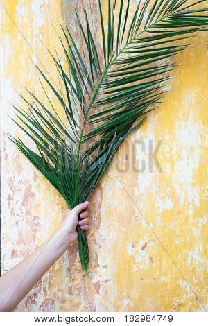 Tropical palm branch in woman hand in front of beautiful old vintage antique rough yellow wall as travel tourism celebration history traditional culture background