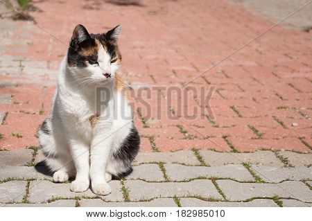 A homeless cat. Ginger cat sitting on the road. Sad cat