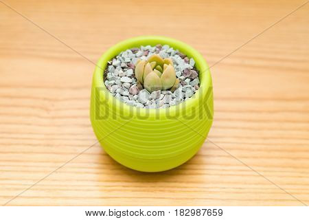 pot of green succulent plant on wood table