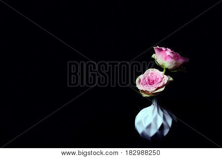 Beautiful pink roses in a white vase on a dark background
