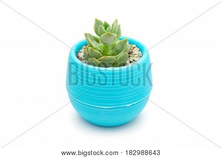 pot of green succulent plant on a white background