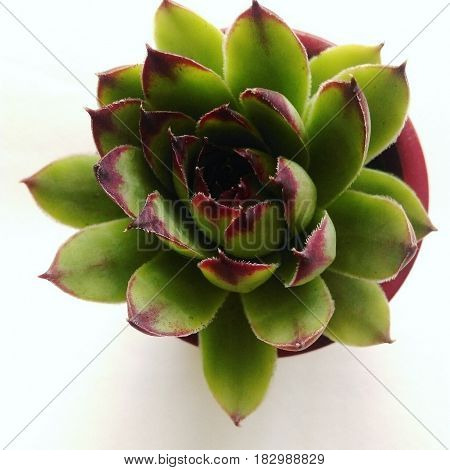 Plant. Background. Focused. Nice. Naturre. Decoration. Lovely.