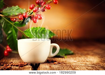 Coffee. Cup of steaming coffee with the real coffee ripe berries, flowers and leaves on a branch of coffee tree over wooden background, on wood table. Border art design