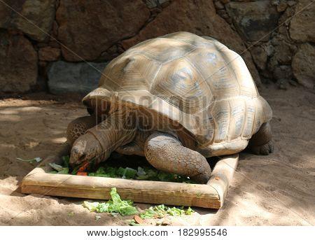 Turtles in Zoo, funny looking turtles