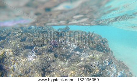 Bright Colored Coral Reef In The Red Sea In Hurghada, Egypt, Sunlight, Waves, Under Water